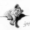 Alessandro Sammaritano | Leoncino | grafite su carta